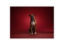 静岡 富士 富士市 ペット 写真 写真館 記念写真 犬
